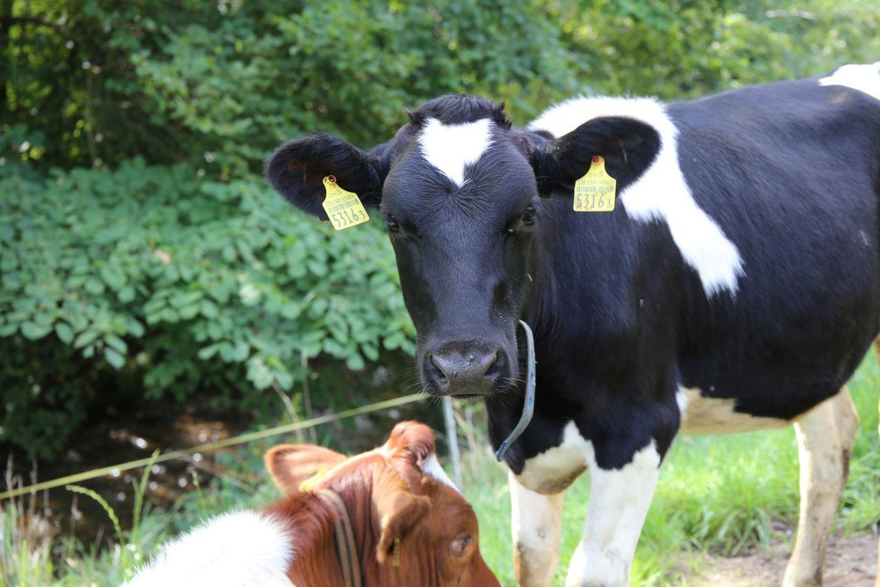Milch-Kräuter-Käseweg Hergiswil b. Willisau