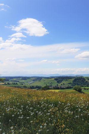 Zell - Willisau