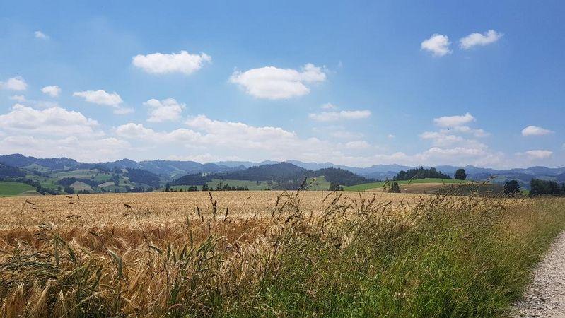 Von Willisau nach Menzberg der Sonne entgegen